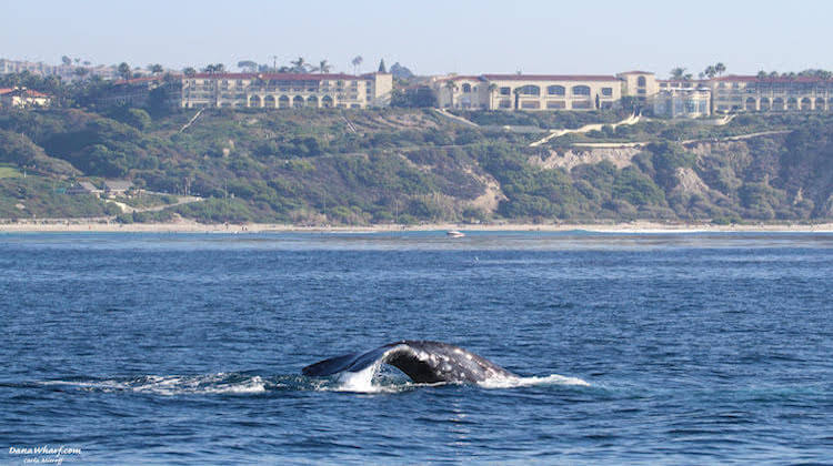 Marine Life in Dana Point